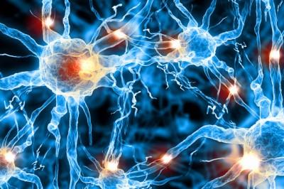 Understanding Your Nervous System
